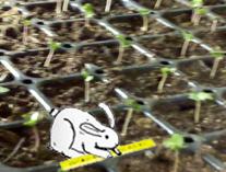 Radiant Bunny testing